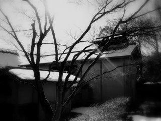 A ray of light shining through bare branches at Yokokan Garden