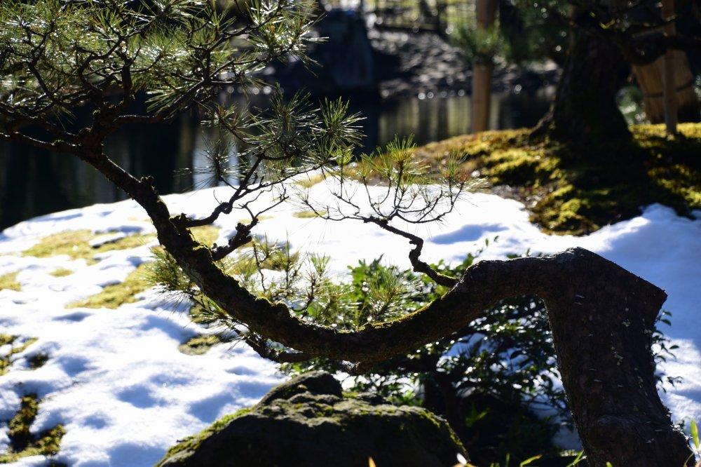 Yokokan Garden was still half-covered with snow