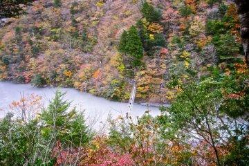 가을 단풍잎들과 함께 위에서 찍은 사진