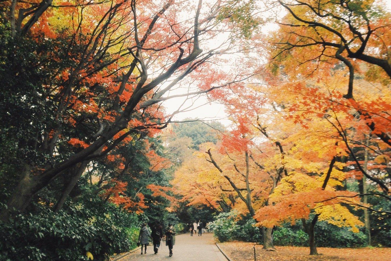Musim gugur di Shinjuku gyoen.