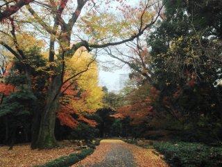 Jalanan sepi namun menyala dari dedaunan musim gugur