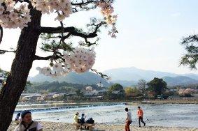 Знаменитые места ханами в Киото