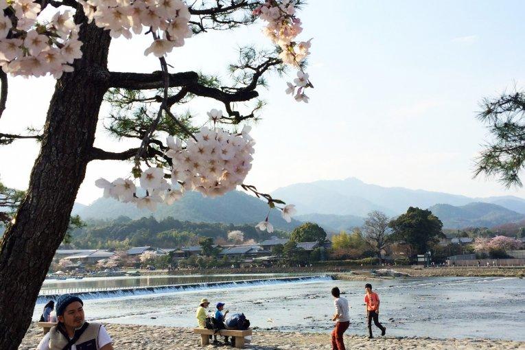 Où Aller pour le Hanami à Kyoto