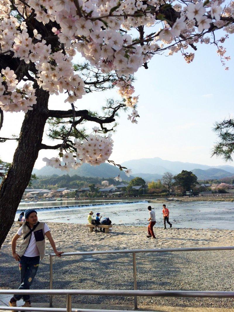 岚山公园是很热门的赏樱点