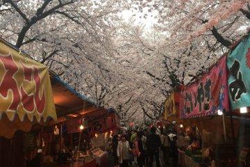 金阁寺边上的樱花祭