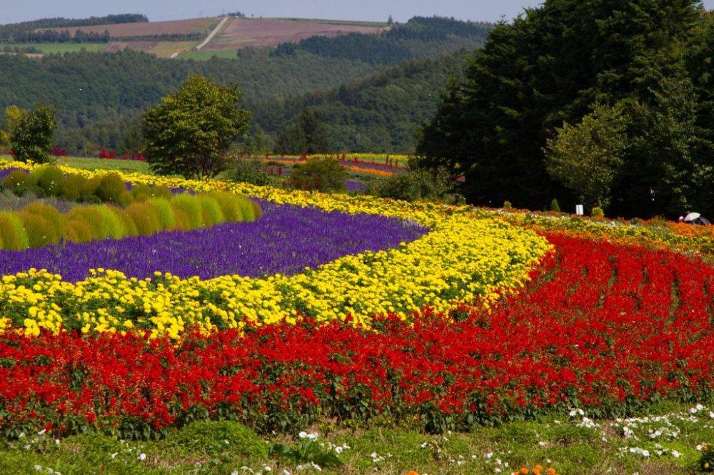 Ферма Томита, Япония