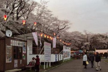 The park is a popular place for festivals and viewing cherry blossoms.