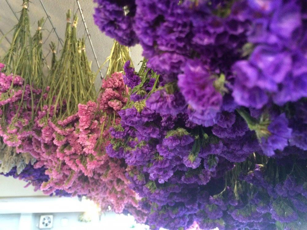 Bunga kering di daerah toko.