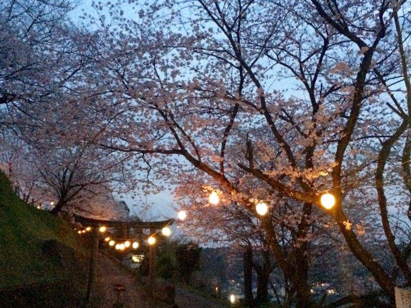 토리이를 향해 돌계단을 오르면 벚꽃 터널이 아름답다