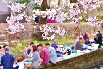 Hướng dẫn ngắm hoa anh đào (Hanami)