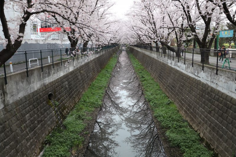 Sakura mirror along the Asao River.