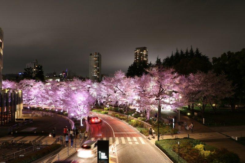 Night View of Sakura Street in Roppongi Midtown.