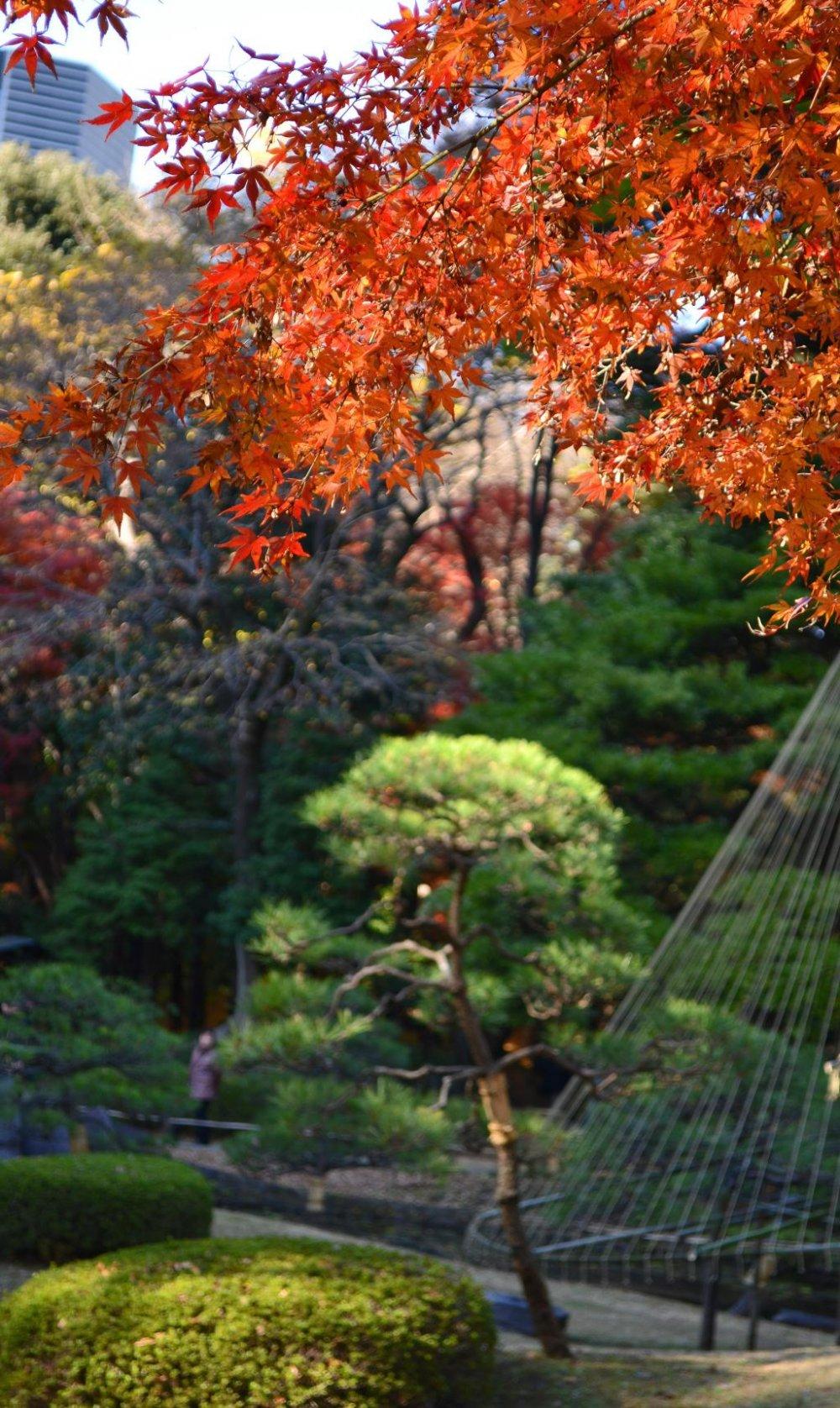 秋色的光輝