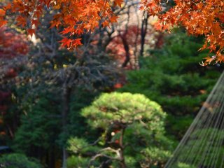 가을 오렌지의 화려함