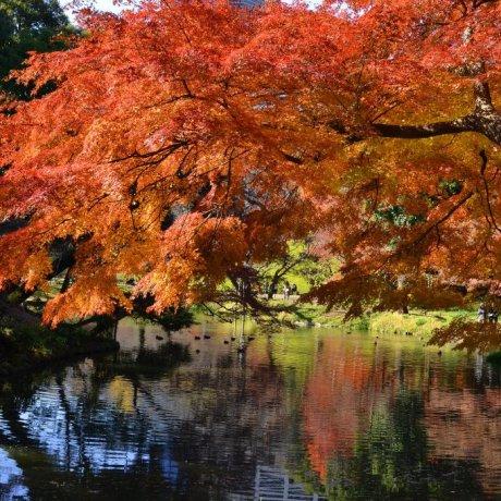 Lose Yourself in the Koishikawa Botanical Garden