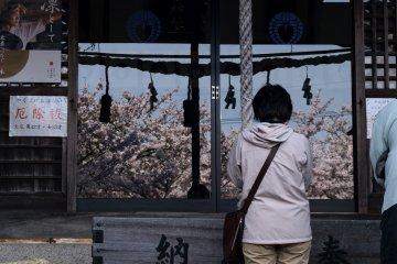 Cherry blossoms highlight the inner sanctuary