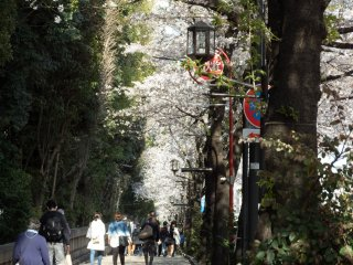 A view of Yasukuni Dori, the street leading up to this shrine