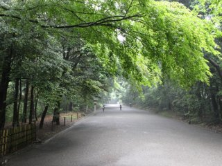 The gravel path to Meiji Shrine is lined with greenery on both sides .