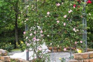 Wedding photos being taken at the rose garden