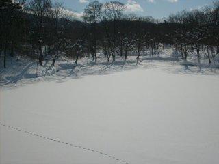 As aves locais deixam rastos na neve fresca