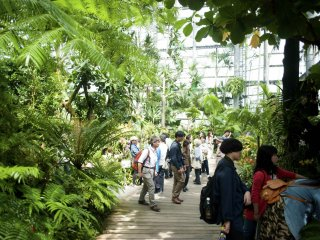 The humid tropical garden