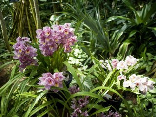 There is a wide variety of tropical orchids at the conservatory