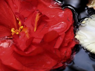 Water droplets on a Japanese rose.
