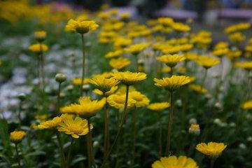 黃色野花在角落邊點綴著主角,渺小謙卑的存在,令人疼惜