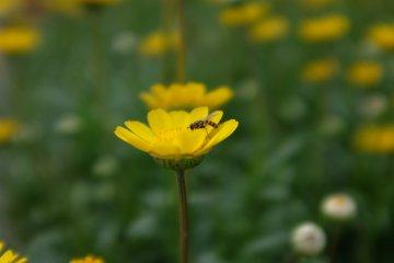 花卉盛開的季節-蜜蜂們的饗宴