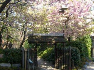 Vào những ngày xuân, những bông hoa anh đào bao phủ lối vào