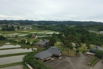 Beautiful rice fields by the park