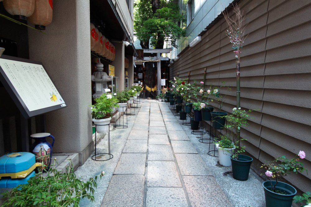 Plants lined-up along the shrine's entrance way