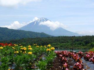Цветы, посаженный на северном берегу озера Сайко