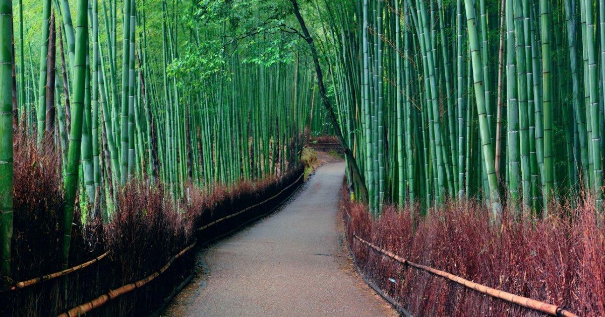 Arashiyama Area Guide - Things to do in Arashiyama, Kyoto - Japan Travel