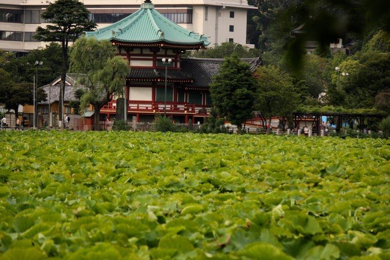 Un día en el parque Ueno