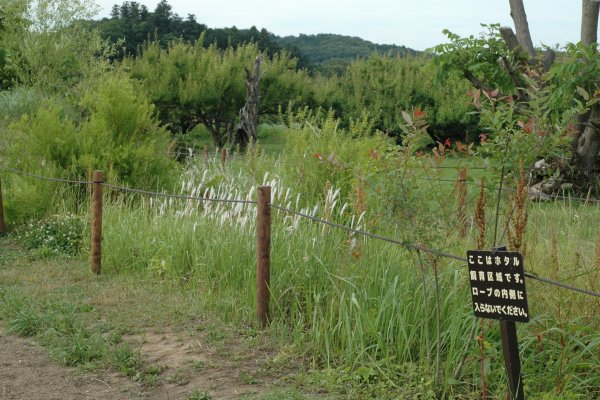 The firefly sanctuary is roped off. A small stream runs through the reeds.