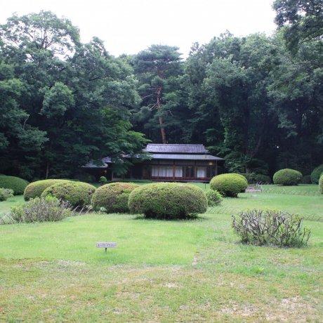 Le Jardin Meiji Jingu Gyoen en Juin