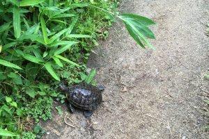 Une tortue !