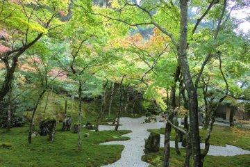 Main garden 4
