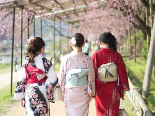 You may also want to try rental kimono and stroll down Kamo River!