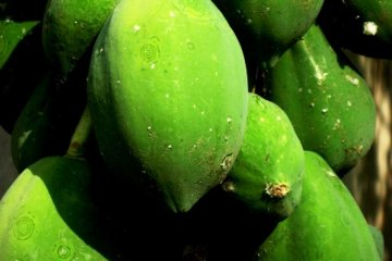 Exotic wild summer fruit of all kinds flourish on this island