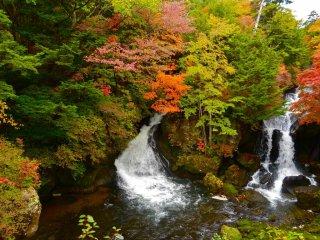 Rouges flamboyants, jaunes froids et verts foncés entourent les cascades