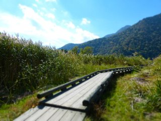 Wooden path to the lake