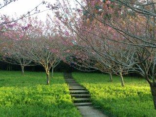 Sebuah setapak di Taman Tenjinyama