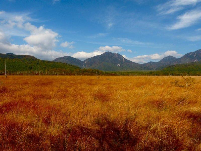 绿色的大草原变成了咖啡色的大地