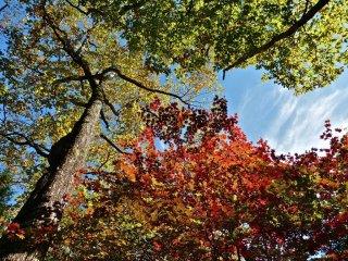 나뭇잎들은 그들의 독특한 화려한 드레스를 변화시킨다