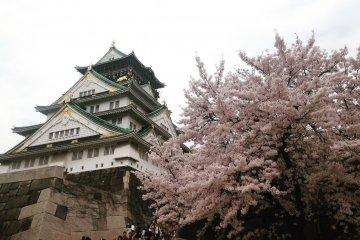 أوساكا، كيوتو، نارا أم كوبي؟