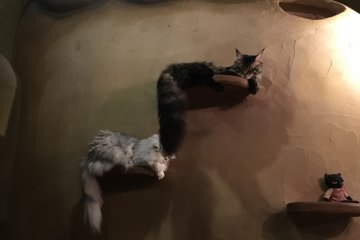 Two felines letting their tails loose while napping