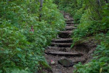 Path near the trailhead