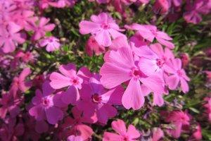 Сами цветы - довольно маленького размера